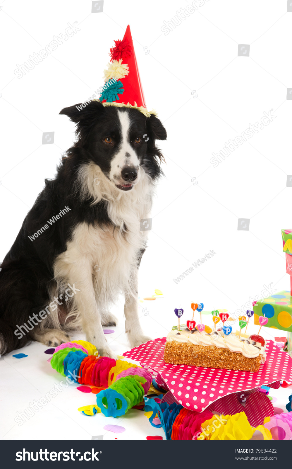 border collie happy birthday images ; stock-photo-border-collie-is-having-a-colorful-birthday-79634422