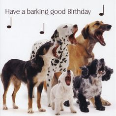 dog picture birthday wishes ; 6ce95fd506f0531f7622466b2de8195d