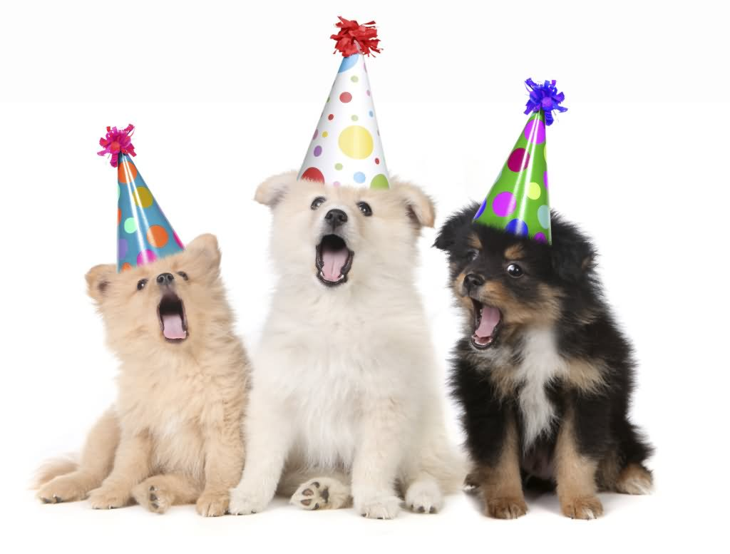 dog picture birthday wishes ; Funny-Animal-Puppies-With-Birthday-Hats