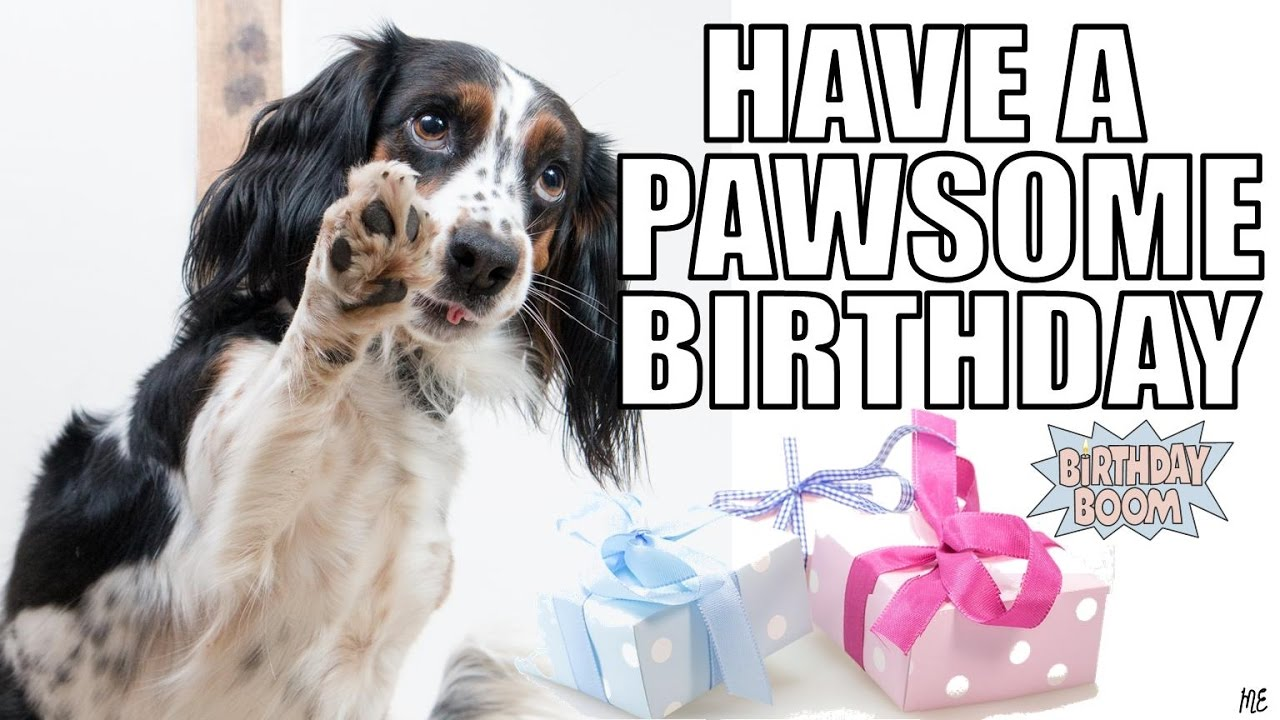 dog picture birthday wishes ; maxresdefault