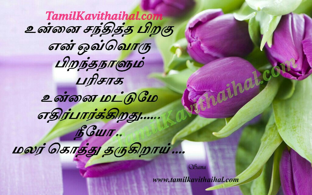 download birthday pictures and wishes ; piranthanaal-kavithai-love-santhippu-boy-feel-birthday-wishes-purple-tulips-flowers-tamil-images-sana-download