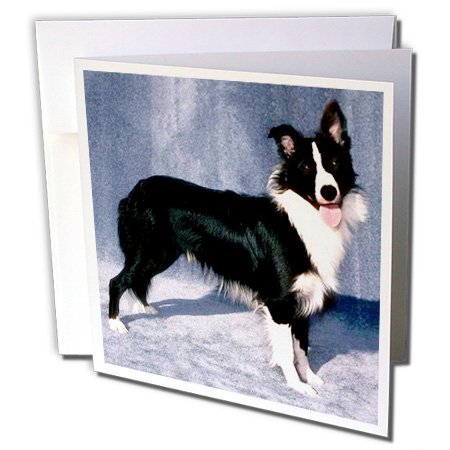 free border collie birthday cards ; 24db7750bd_51JkBsGIGKL