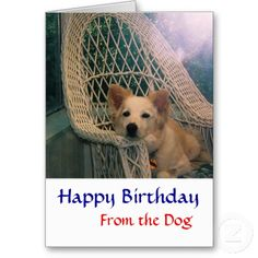 free border collie birthday cards ; 266476510f84855e634376428233e24e--red-border-collie-funny-greeting-cards