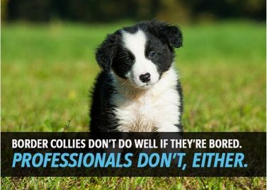 free border collie birthday cards ; 6891e666494173cafc19b1baf05a0f3d--e-card-greeting-cards
