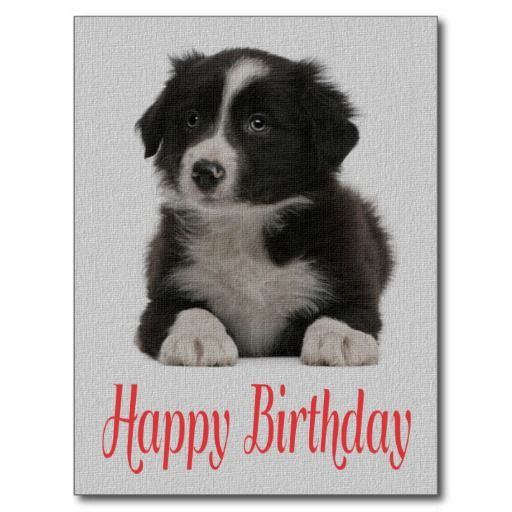 free border collie birthday cards ; 7ffb878f5d1c6553f74540284f5ee0b0--th-birthday-birthday-ideas