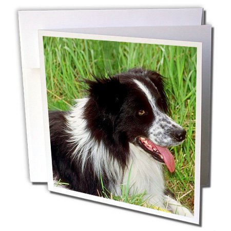 free border collie birthday cards ; af52eb3d51_51DWvnTKoYL