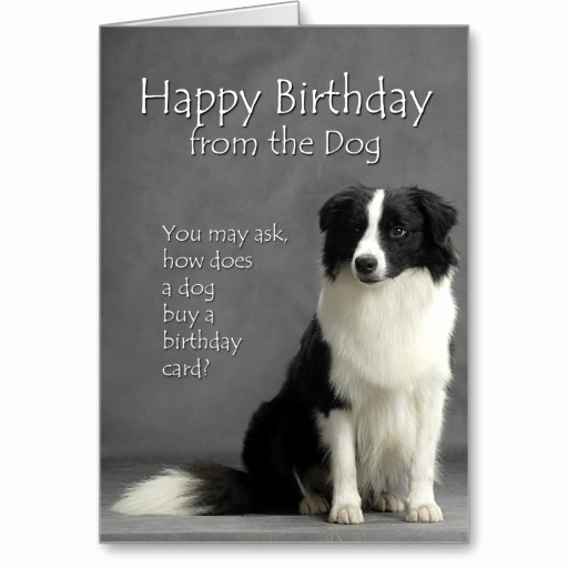 free border collie birthday cards ; border-collie-birthday-card-unique-smart-deals-for-from-the-border-collie-greeting-cards-from-the-of-border-collie-birthday-card