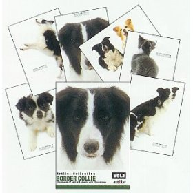free border collie birthday cards ; border_collies_artlist