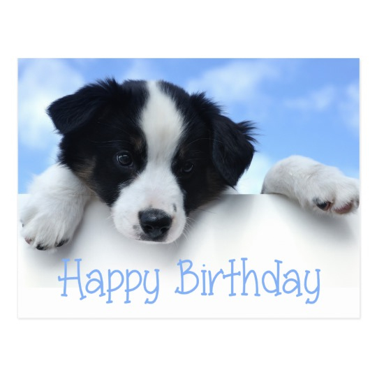 free border collie birthday cards ; happy-birthday-border-collie-puppy-dog-post-card-zazzle-valuable-border-collie-birthday-card