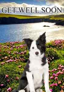 free border collie birthday cards ; s-l300