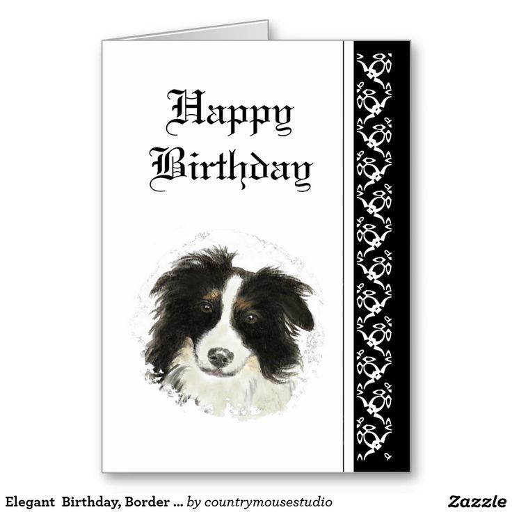 happy birthday border collie ; 03203558cf275db458e831f7b5caed2d--border-collie-puppies-collie-dog