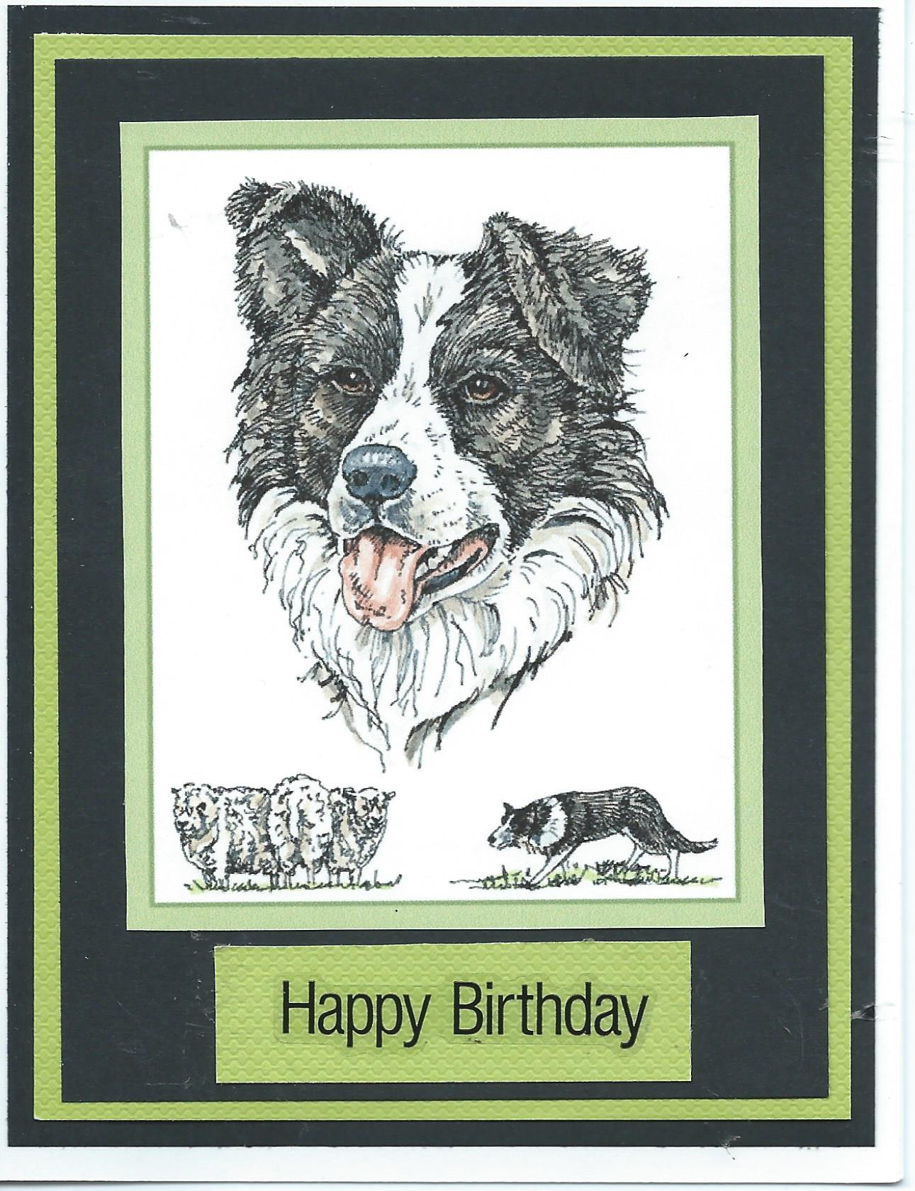 happy birthday border collie ; 6cb77968d1c95d7f8e728f38c22f4224