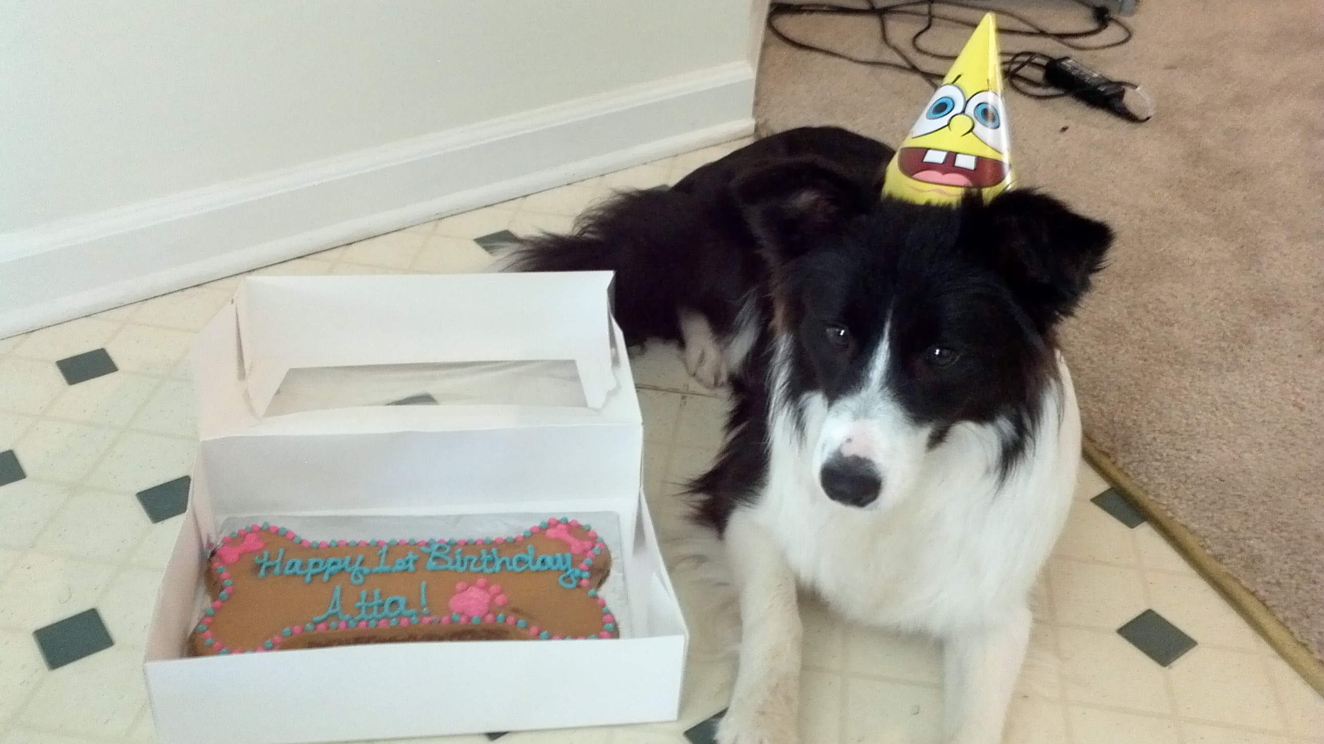 happy birthday border collie ; Atta-birthday