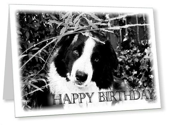 happy birthday border collie ; aa9a40c762767600e7fbfa86898b4e47--collie-dog-border-collie