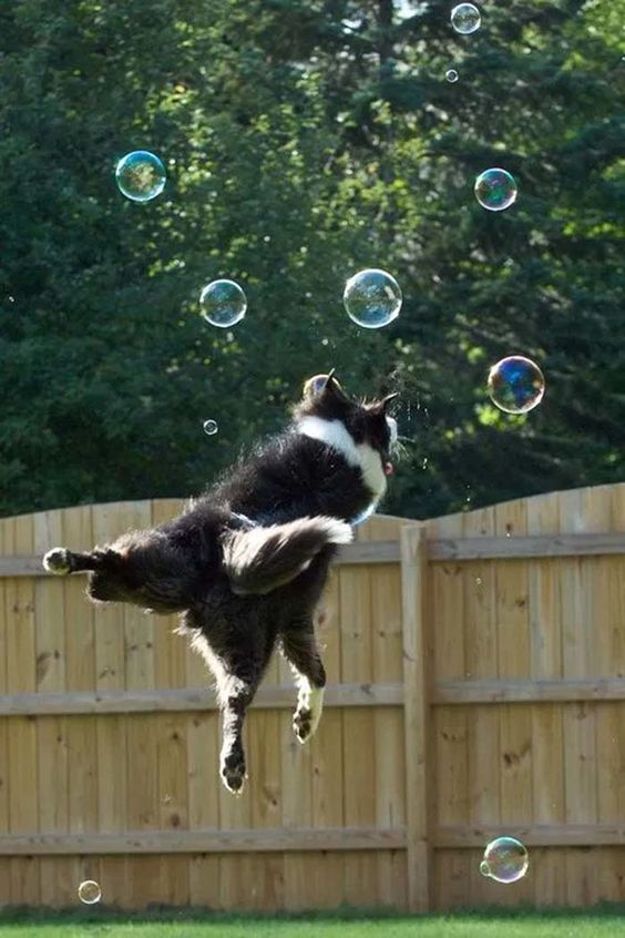 happy birthday border collie ; border-collie-bubbles