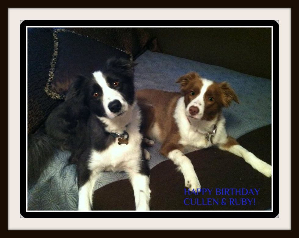 happy birthday border collie ; c02f98fc27286b2af85e4d8ae1e17923