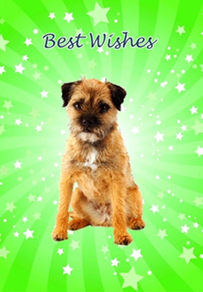 happy birthday border terrier ; BORDER%2520TERRIER%2520STK%2520CARD%2520FRONT
