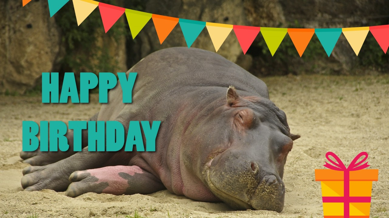 birthday hippo picture ; maxresdefault