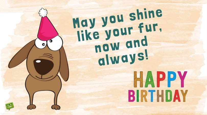 dog wishing happy birthday ; Cute-birthday-wish-for-your-pet-dog-on-picture-with-funny-dog