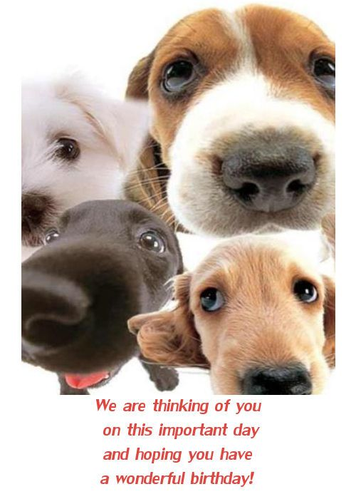 dog wishing happy birthday ; puppy-greeting-cards-dog-birthday-cards-facebook-happy-birthday-card-with-dogs-download