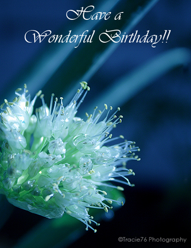free online 123 birthday greeting cards ; 303215
