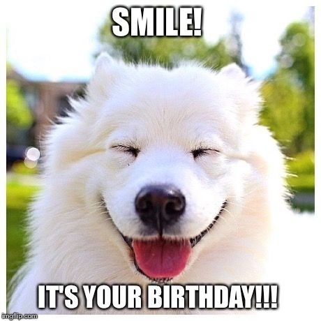 happy birthday animal meme ; 2288296d9924dd583c0714b201f010f2