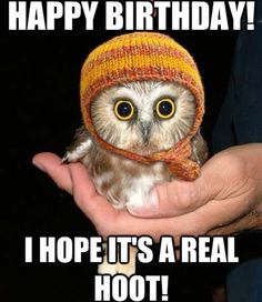 happy birthday animal meme ; 4-10