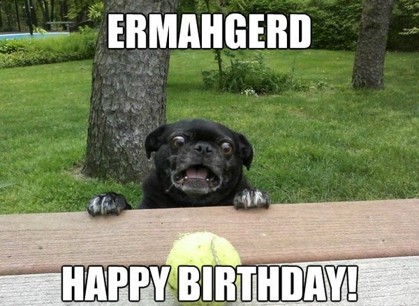 happy birthday animal meme ; 5-10