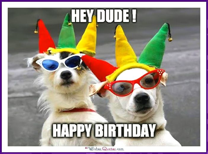 happy birthday animal meme ; 9af91a29a2fb882b4cfdad7fde85ac9e