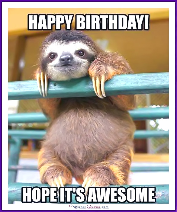 happy birthday animal meme ; Birthday_Memes_Animals_Funny_04