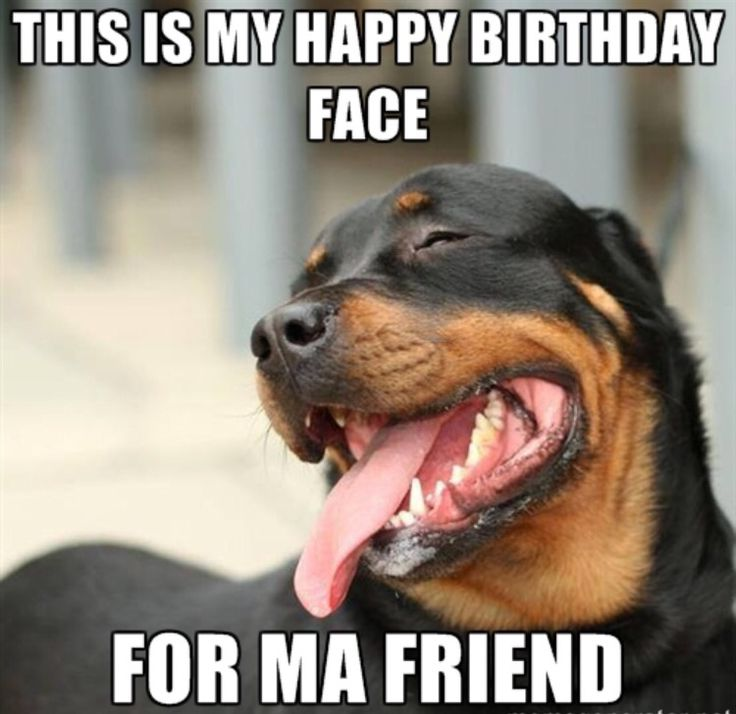 happy birthday animal meme ; Happy-Birthday-Funny-Dog-Rottweiler