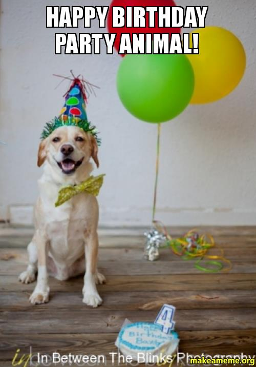 happy birthday animal meme ; Happy-Birthday-party-ap43s9