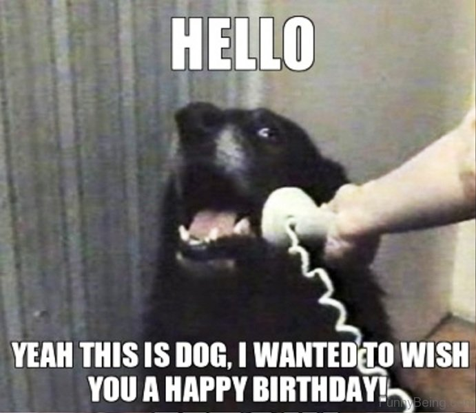 happy birthday animal meme ; Hello-Yeah-This-Is-Dog