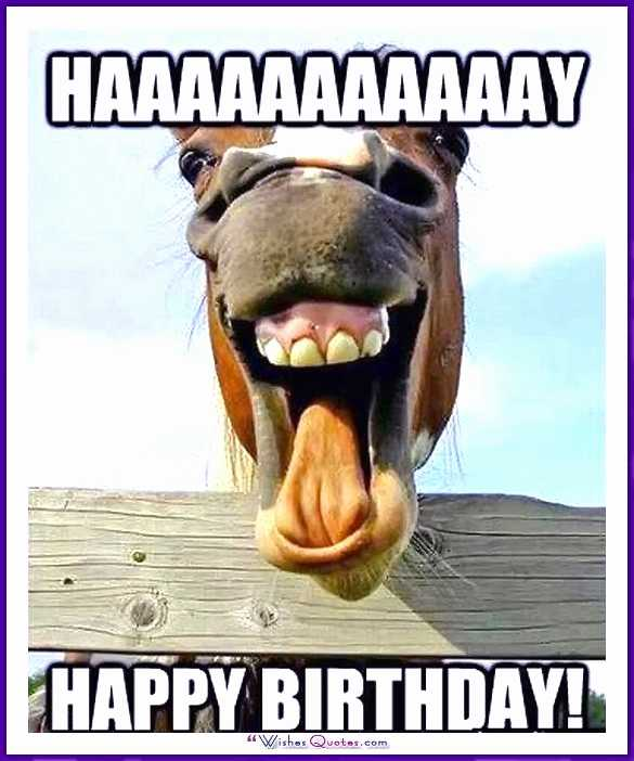 happy birthday animal meme ; funny-animal-happy-birthday-images-new-funny-happy-birthday-meme-animal-of-funny-animal-happy-birthday-images