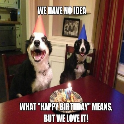 happy birthday animal meme ; happy-birthday-memes-dog-wishesgreeting
