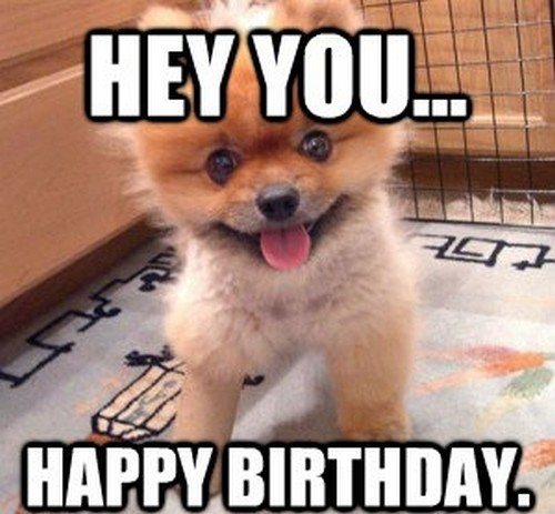 happy birthday animal meme ; pom_happy_birthday_meme_dog1