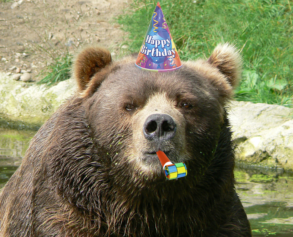 happy birthday bear meme ; 1d46rm