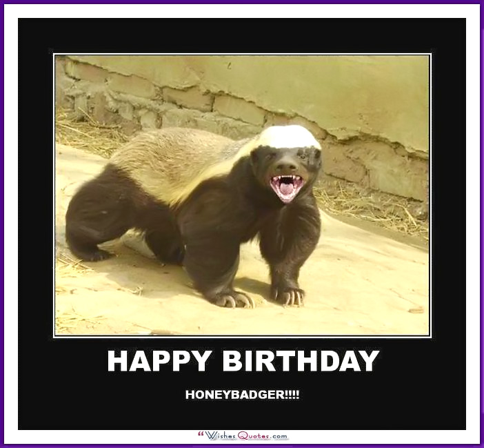 happy birthday bear meme ; Birthday_Memes_Animals_Funny_08