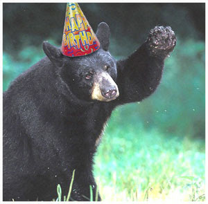 happy birthday bear meme ; bear_happy_birthday