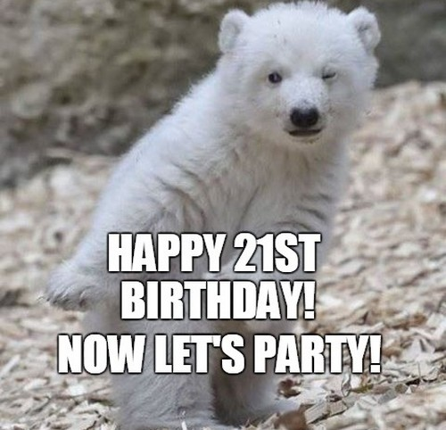 happy birthday bear meme ; polar_bear_happy_21st_birthday_meme1