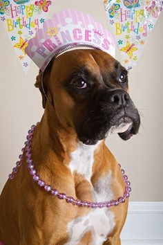 happy birthday boxer dog ; 4e2a8cb50029c6c18857467789dc731a