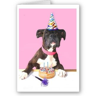 happy birthday boxer dog ; a413c1bce0a753d482f57e2fe90ac7a5