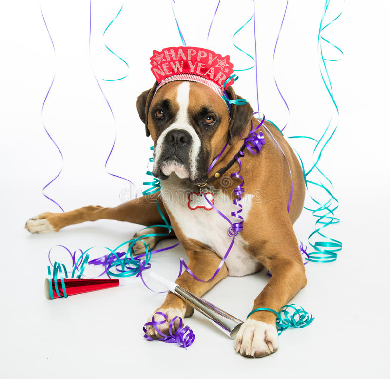 happy birthday boxer dog ; boxer-dog-happy-new-year-28326390