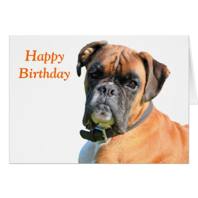 happy birthday boxer dog ; boxer_dog_beautiful_photo_happy_birthday_card-rba6cb00247844136a8a6bf4b0b8896f3_xvuak_8byvr_400