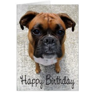 happy birthday boxer dog ; boxer_puppy_dog_happy_birthday_card_verse-r1a94a48181554291874529baf079d511_xvuat_8byvr_307