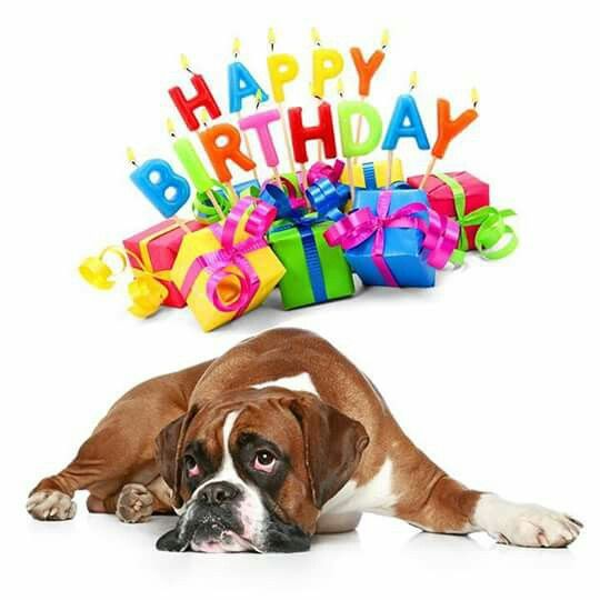 happy birthday boxer dog ; d355e6c30ca5582b09f79405832fe834--boxers-quilting