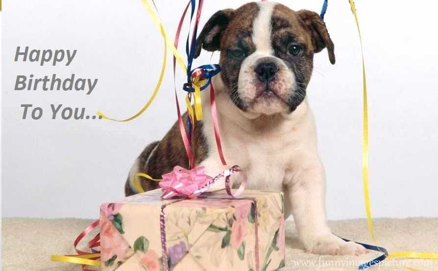 happy birthday boxer dog ; dog-birthday-quotes-best-of-happy-birthday-boxer-dogs-of-dog-birthday-quotes