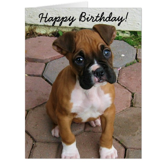happy birthday boxer dog ; happy_birthday_boxer_puppy_greeting_card-rc3fffccd33644adf8acabf3ef75e5ec2_i40k2_8byvr_540