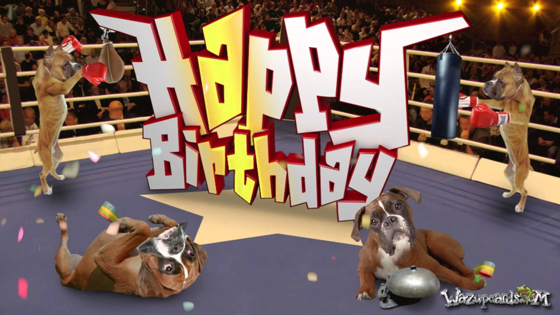 happy birthday boxer dog ; maxresdefault