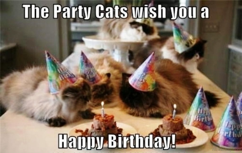 happy birthday cat images ; The-Party-Cats-Wish-You-A-Happy-Birthday